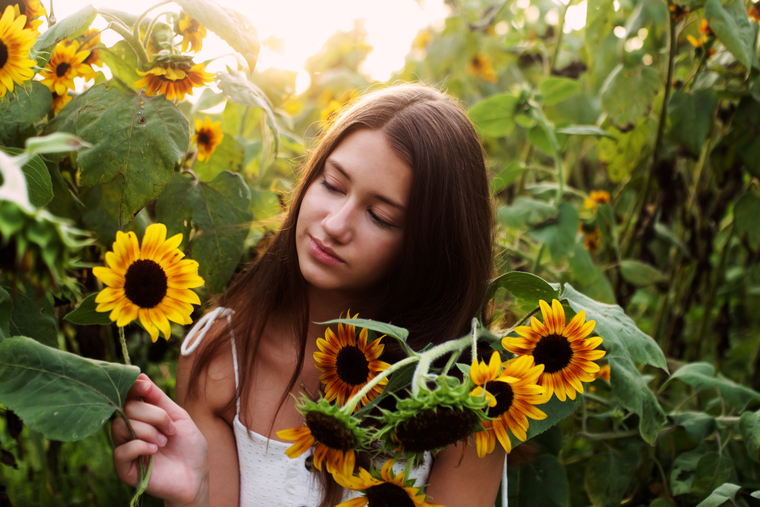 soft-light-and-sunflowers.jpg