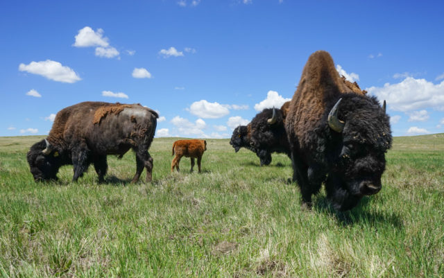 Preserving the past and paving the way for the future - Commemorating Colorado's West Bijou