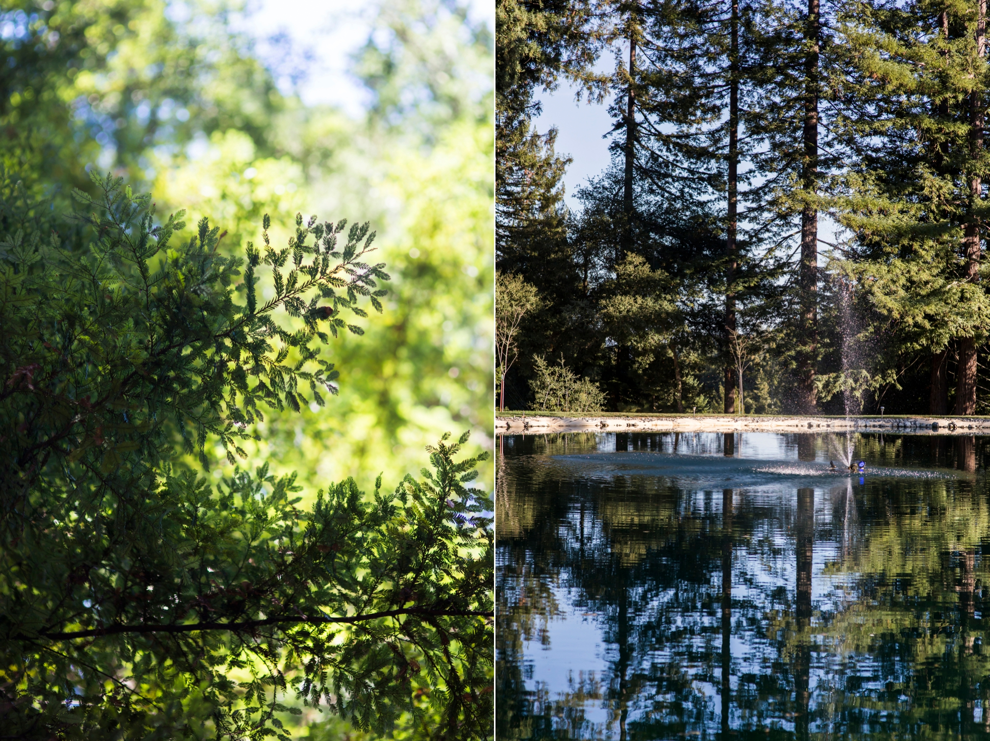 pema-osel-ling-santa-cruz-wedding-photography-lilouette-02.jpg