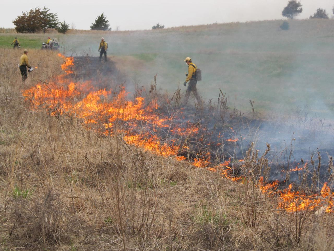 Instead of treating nature as a museum, these people are working with this grassland by utilizing fire.