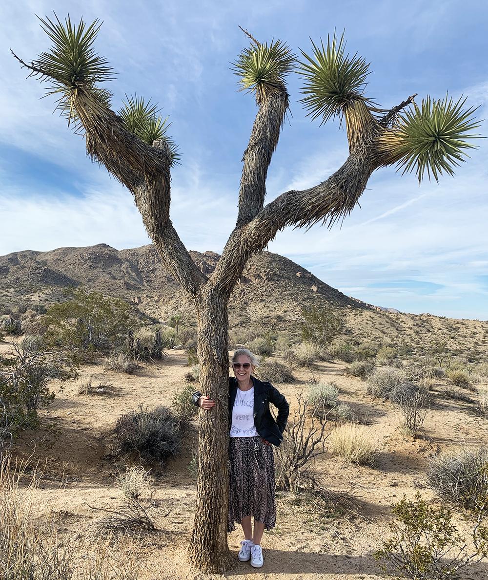 kfd-palm-springs-joshua-tree.jpg
