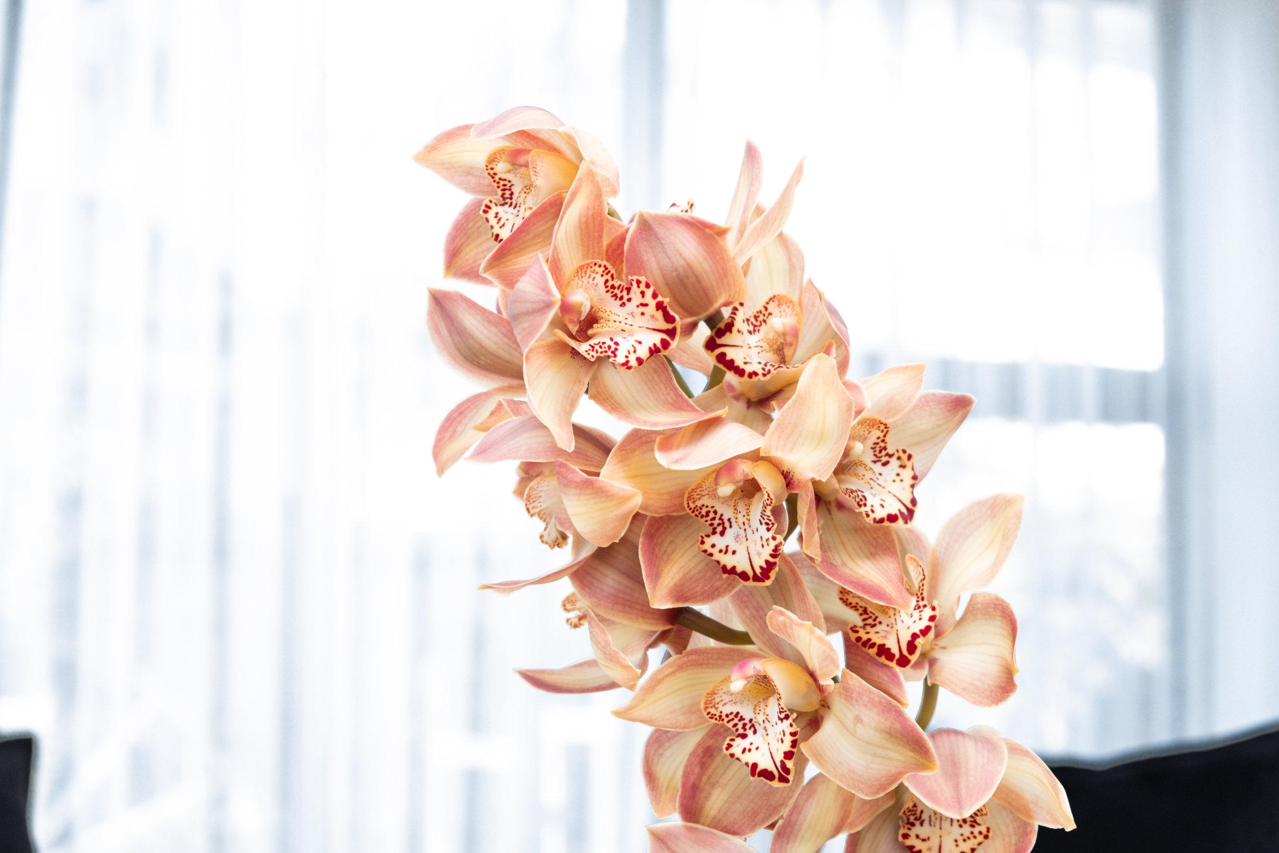 Kirsten Ford Design-Heirloom Inspired Formal Living 5