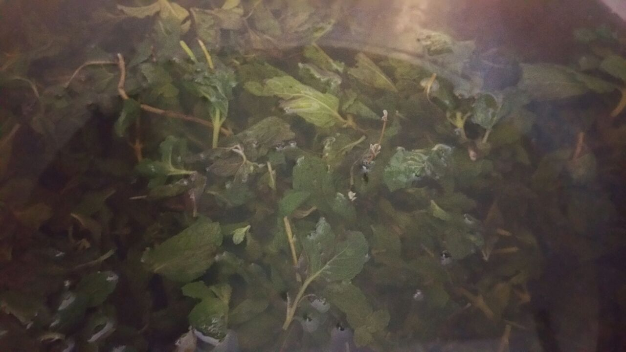 Wild Mint Brewing in preparation for Boukan Bou.