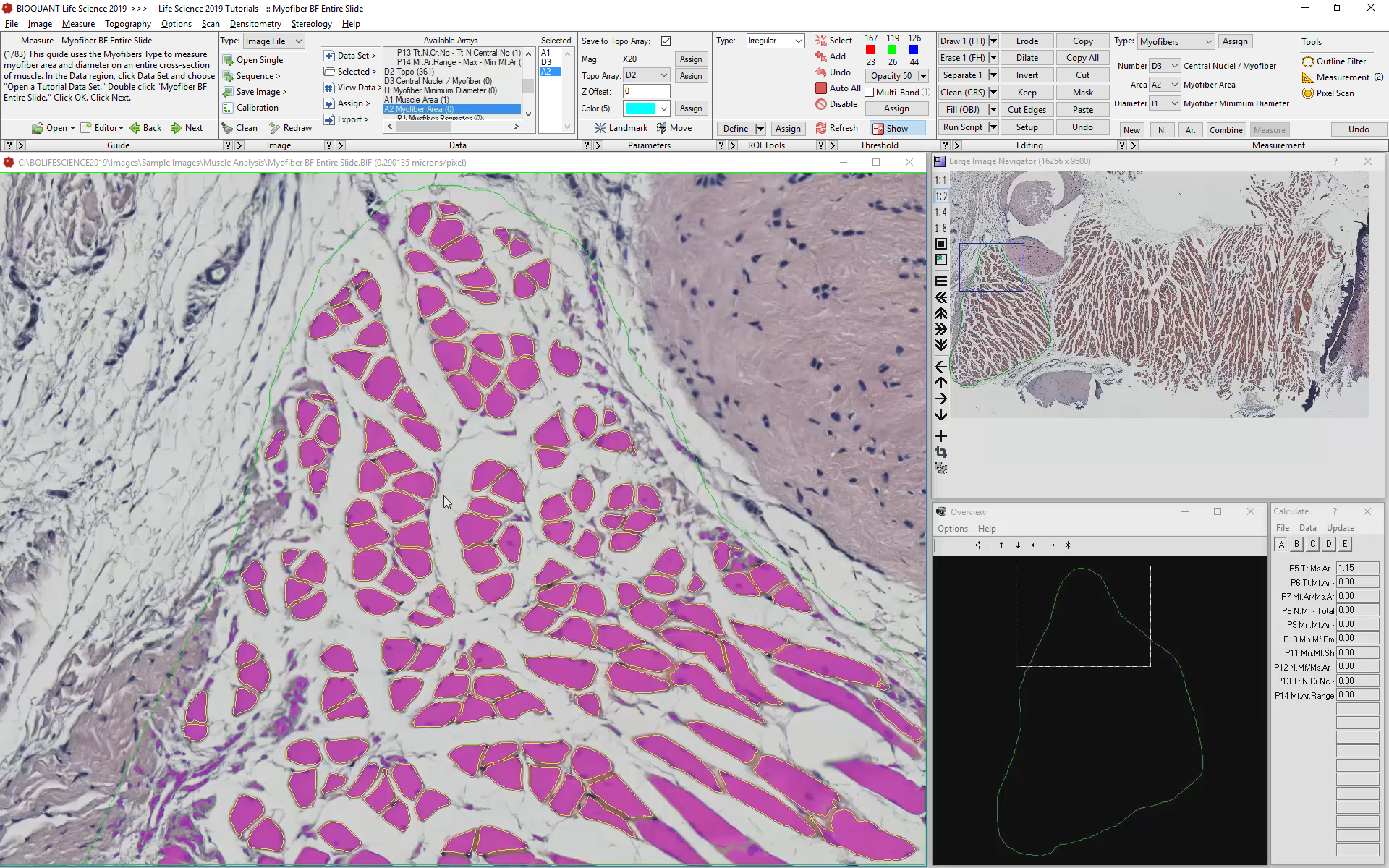 Use Specific Staining to Identify Cells and Nuclei