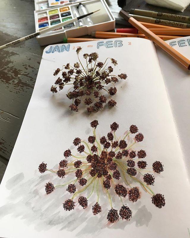 Saturday drawing #lgperpetualjournal #botanicalart #watercolor #stabilopoint88 #pigmamicron