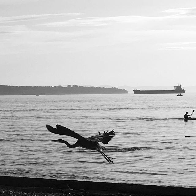 Ambleside beach, herons, kayakers, freighters, sand, ocean, sky.