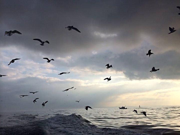 birdlife.jpeg