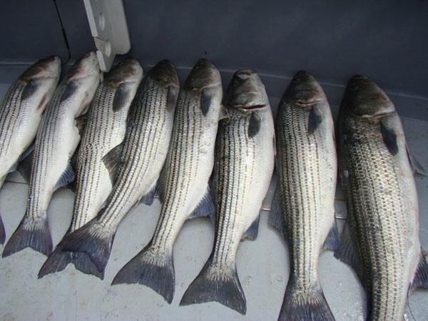 fishing 5-2010 2.jpg
