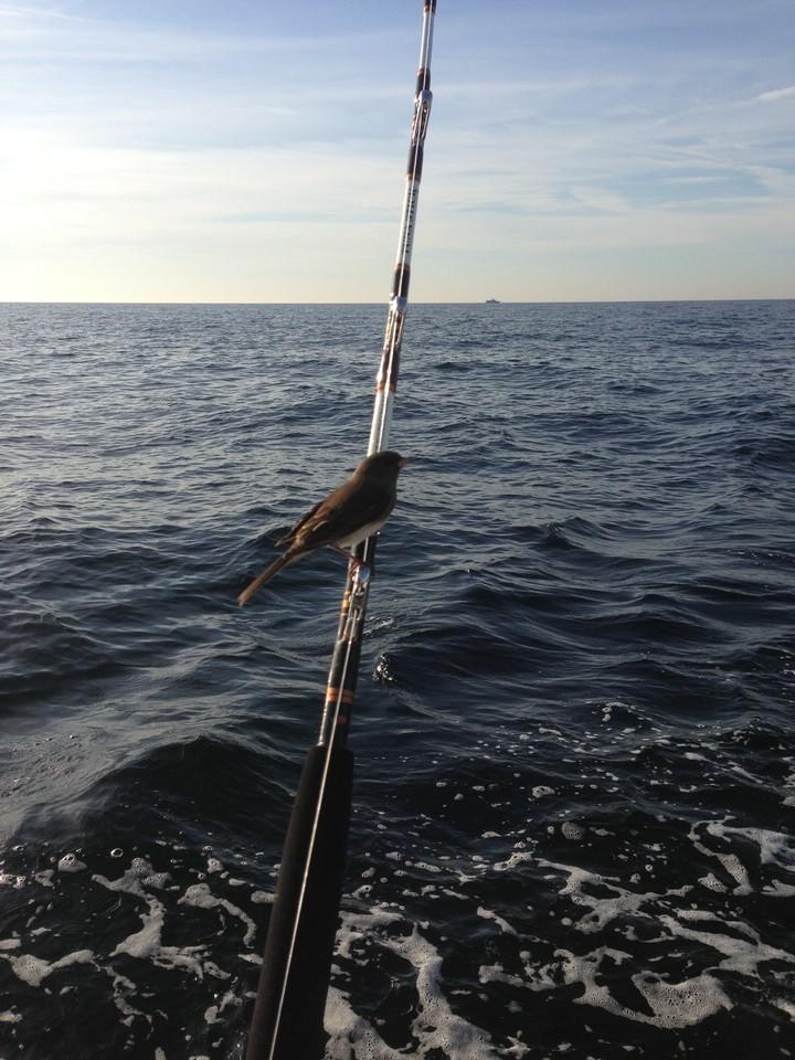 bird_on_rod.JPG