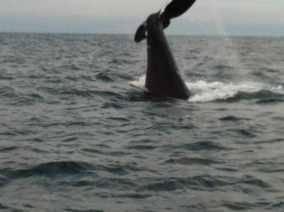 whale_tail1.JPG