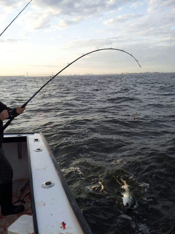 bent rod bluefish.jpeg