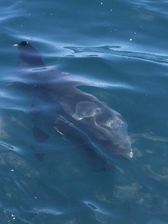 Sun Fish Mola Mola.jpg