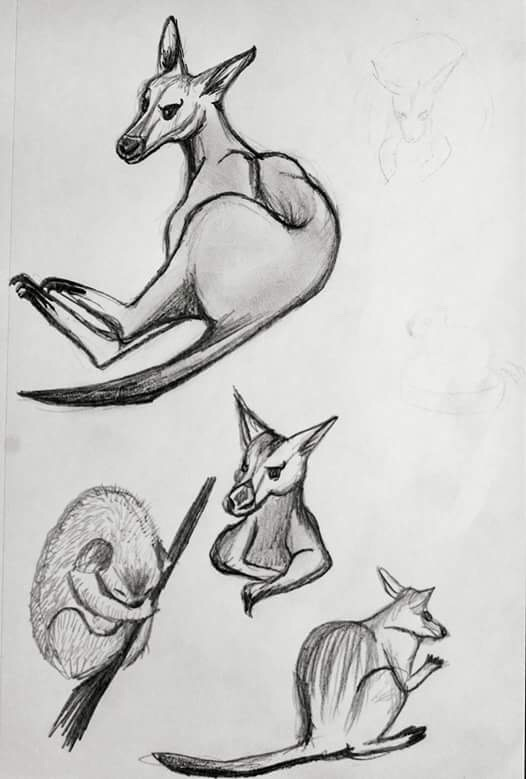 Australian Animal    -     Graphite - 2017
