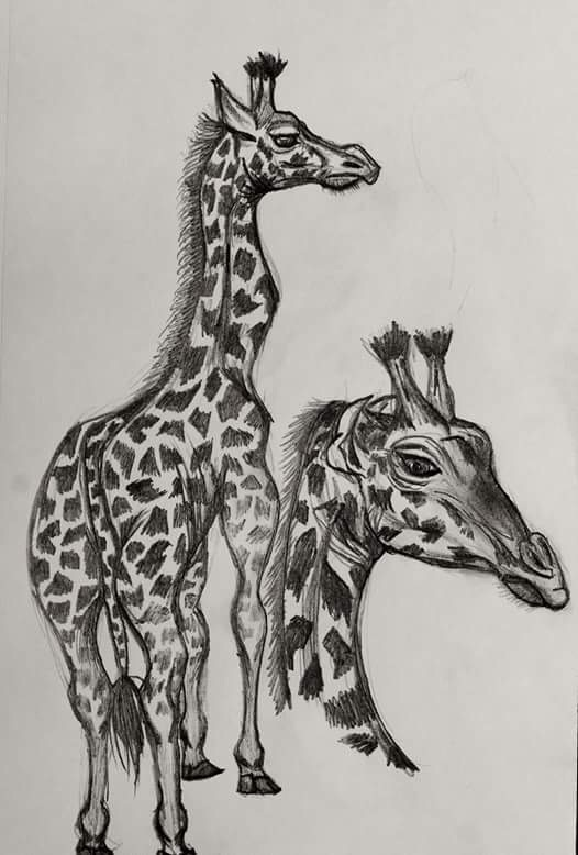 Giraffe Study    -     Graphite - 2017