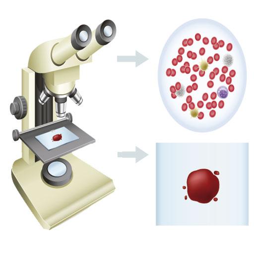 microscopiomuestra.jpg