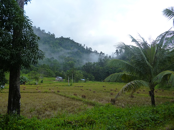 There are a lot of rice fields around Port Barton, since most of the locals still grow their own.