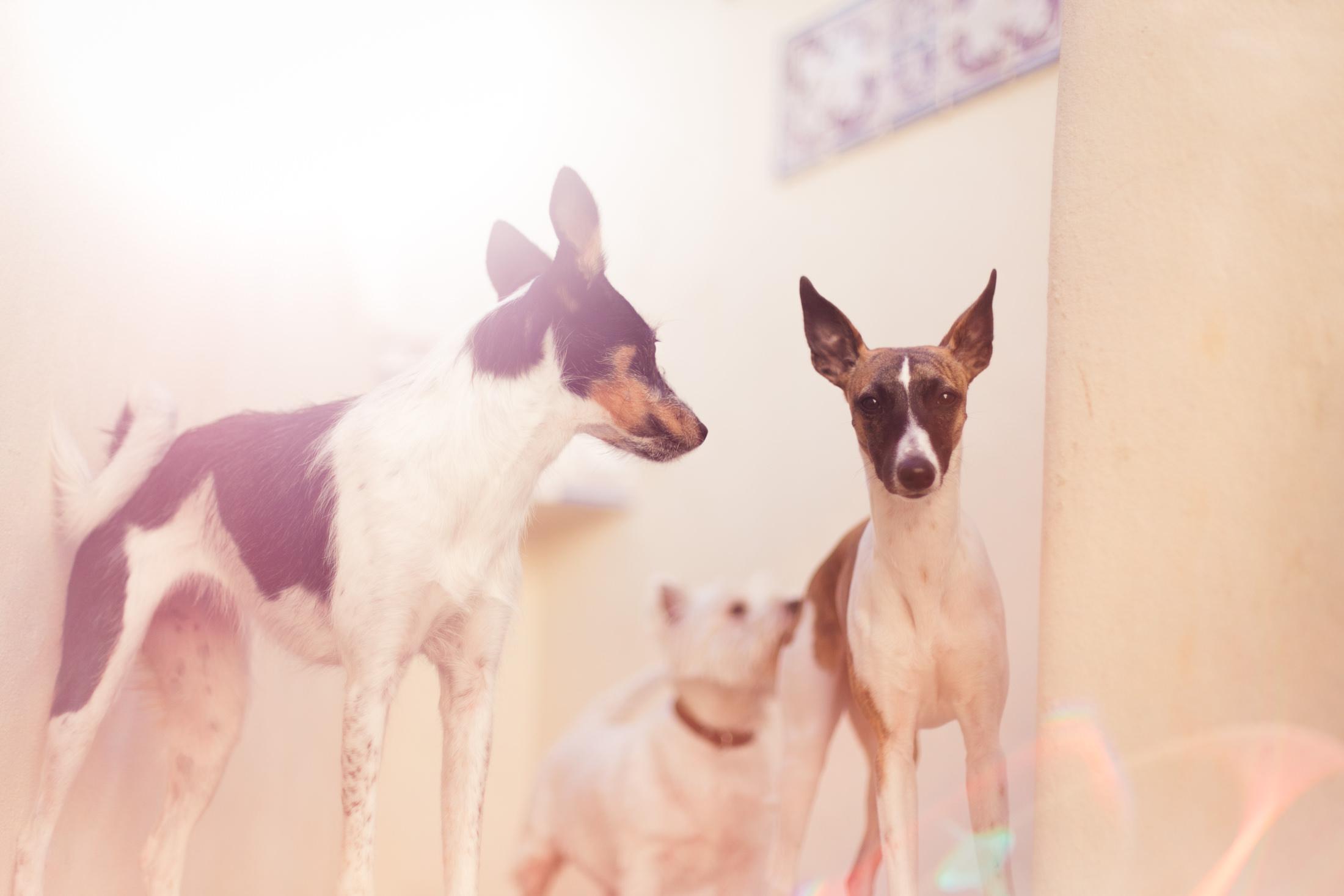 RANDOM DOGS-0002.jpg