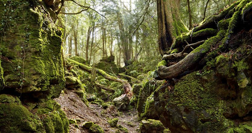puzzlewood-roots.jpg