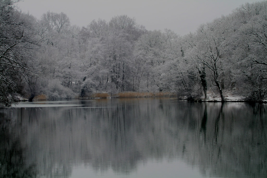 forest snow 2.jpg