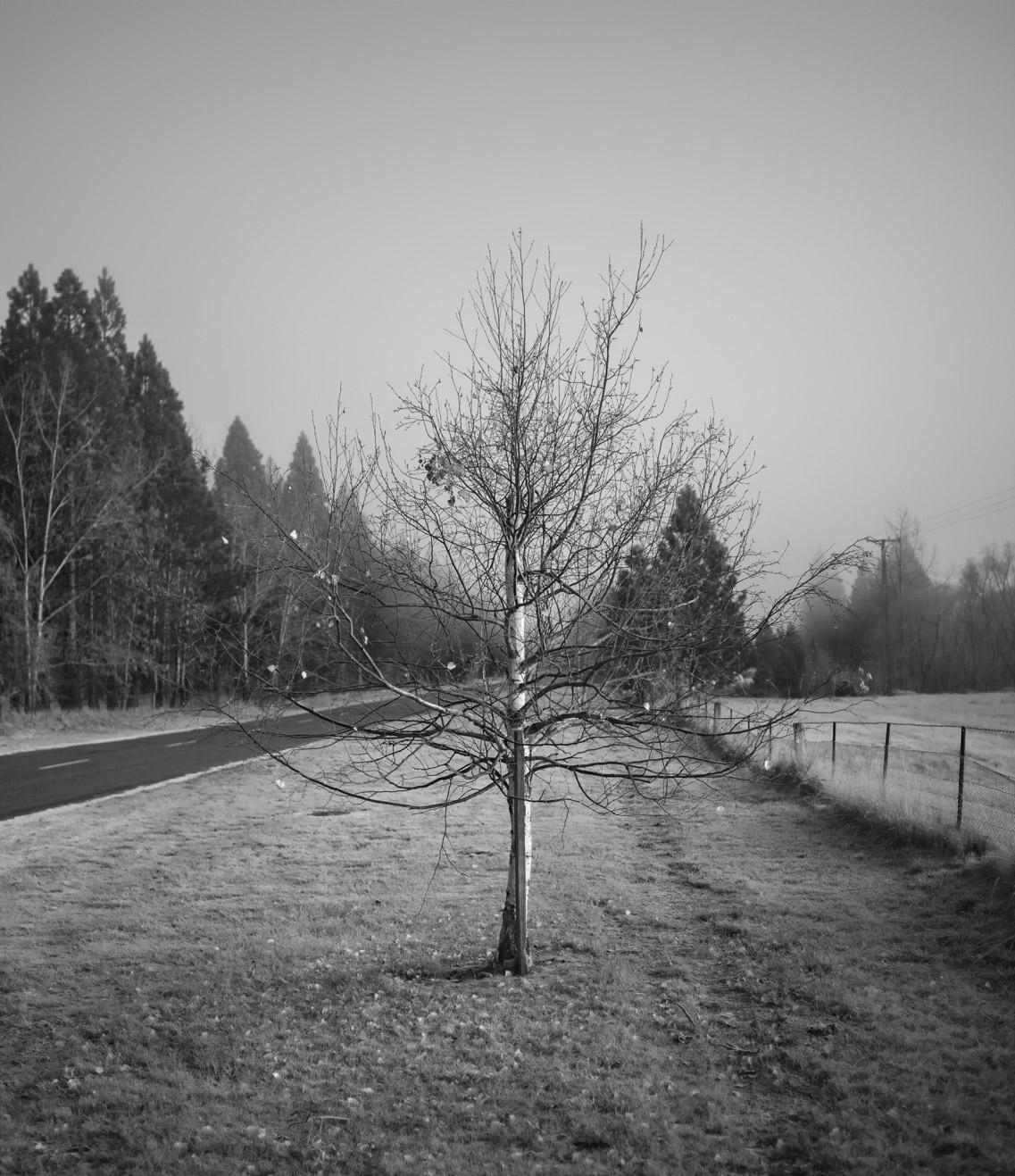 12,000 BHT 22x19'' tree_1.jpg