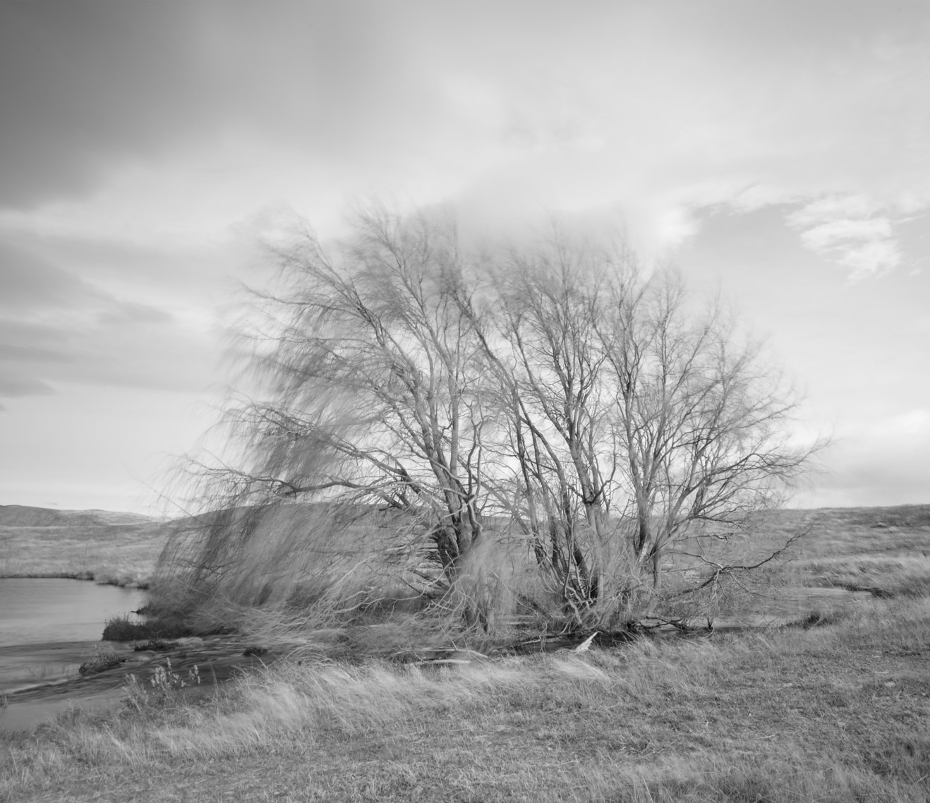 12,000 BHT 22x19'' tree_2.jpg