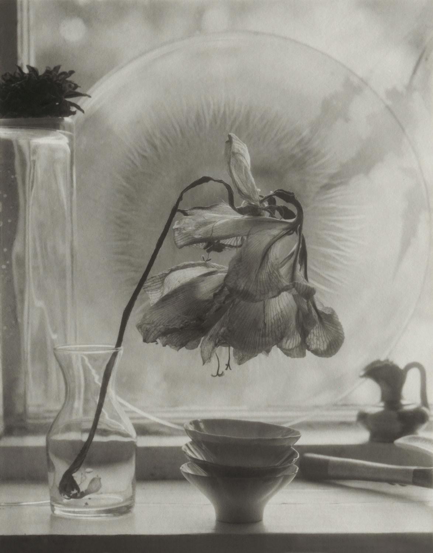 Bell Flower, El Rito, 2001