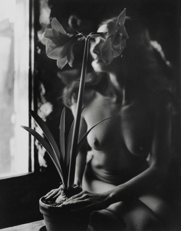 Our Flower, El Rito, 2001
