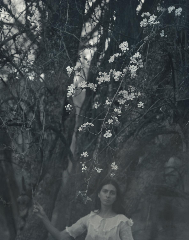 White Dress, Apple Blossoms, El Rito, 2001