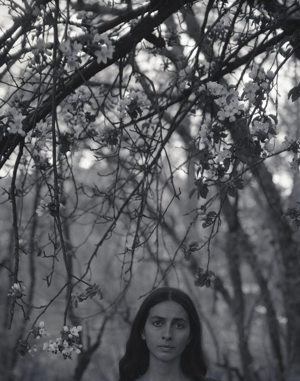 Apple Tree Blossoming, El Rito, 2001