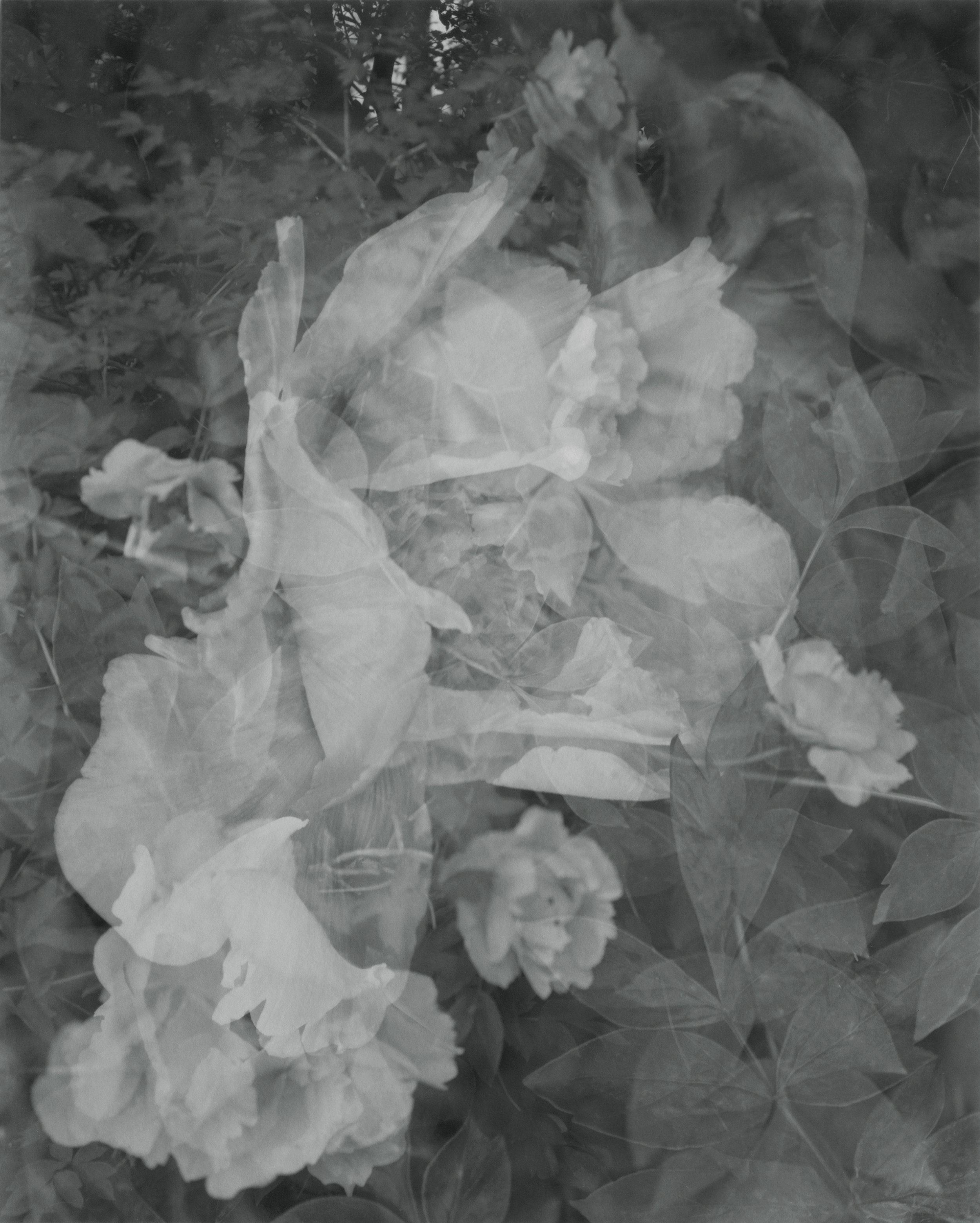 Elvira_Piedra_Breathing in Flowers, Linwood Gardens, 2007.jpg