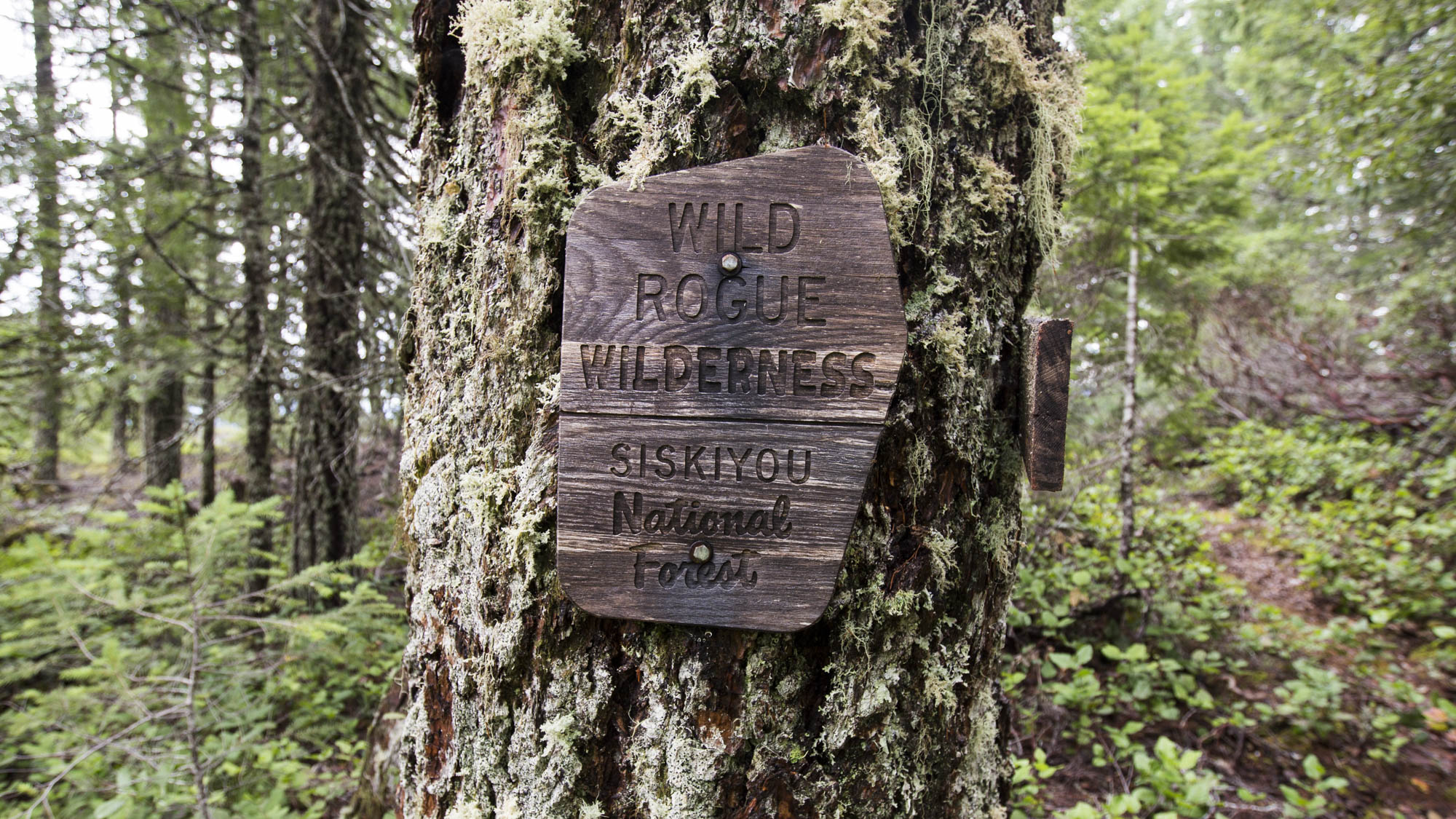 Both of the first two lookouts were in the Rogue-Siskiyou National Forest.