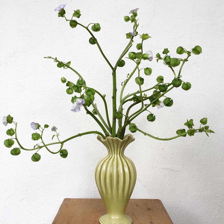 A Lótus disponibiliza periodicamente parte da sua coleção de vasos para renovar o acervo!São peças selecionadas para serem vendidas `a pronta entrega por preços promocionais. - coleção lótus