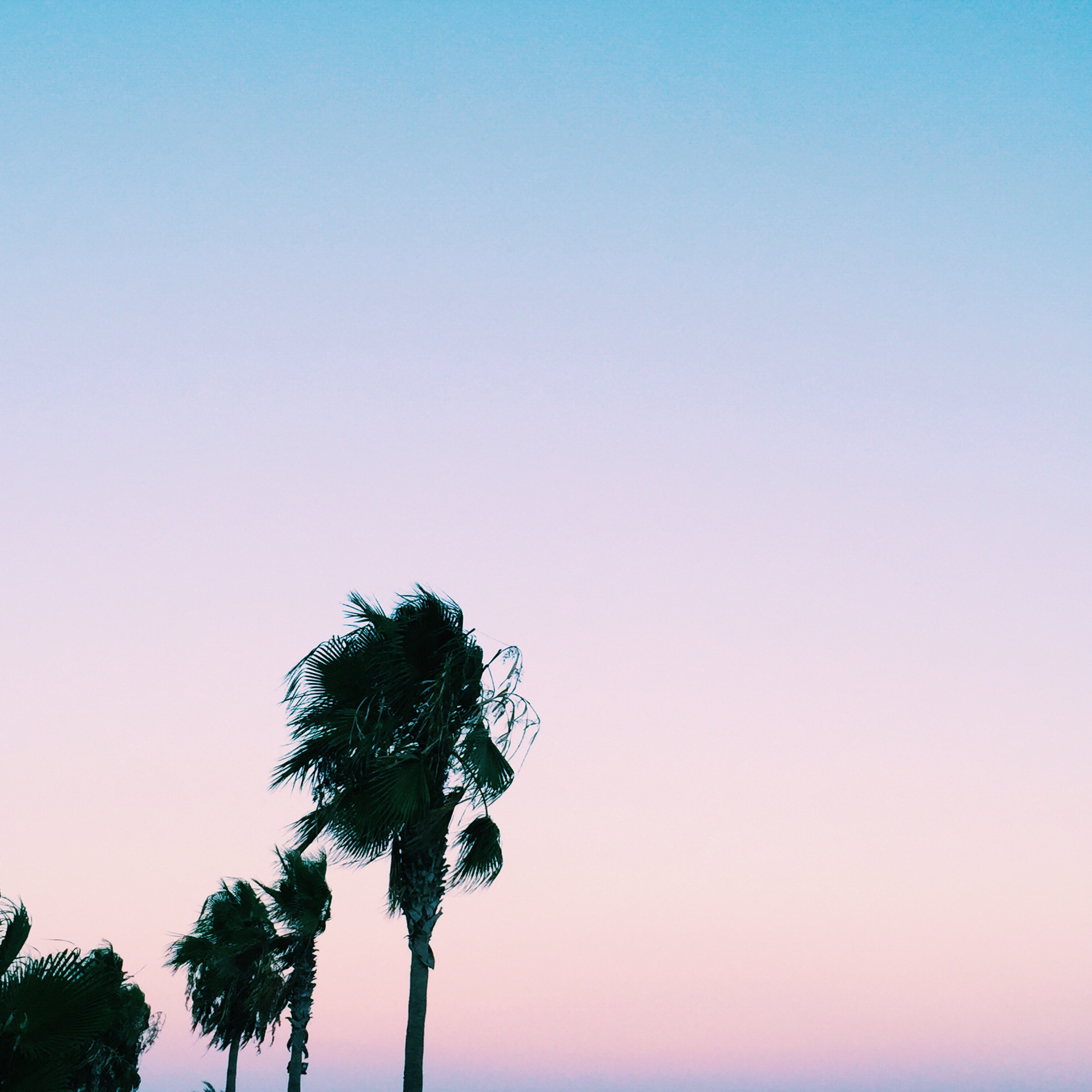 I fell in love with the pastel skies...