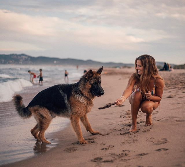 We are so lucky to have you. 🐕❤️ #beachdays #bigpuppy