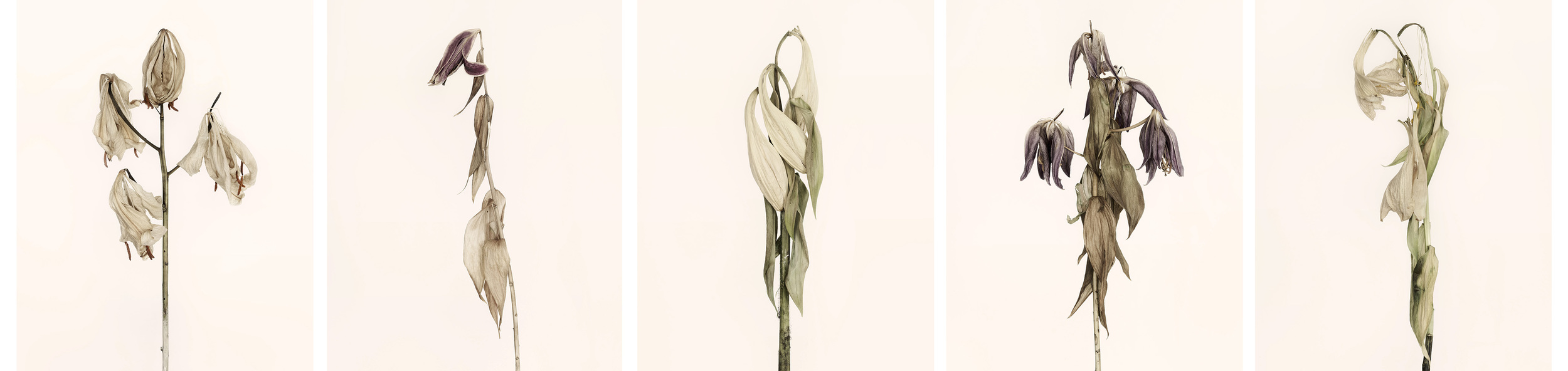 Lilien-Reihe-web.jpg