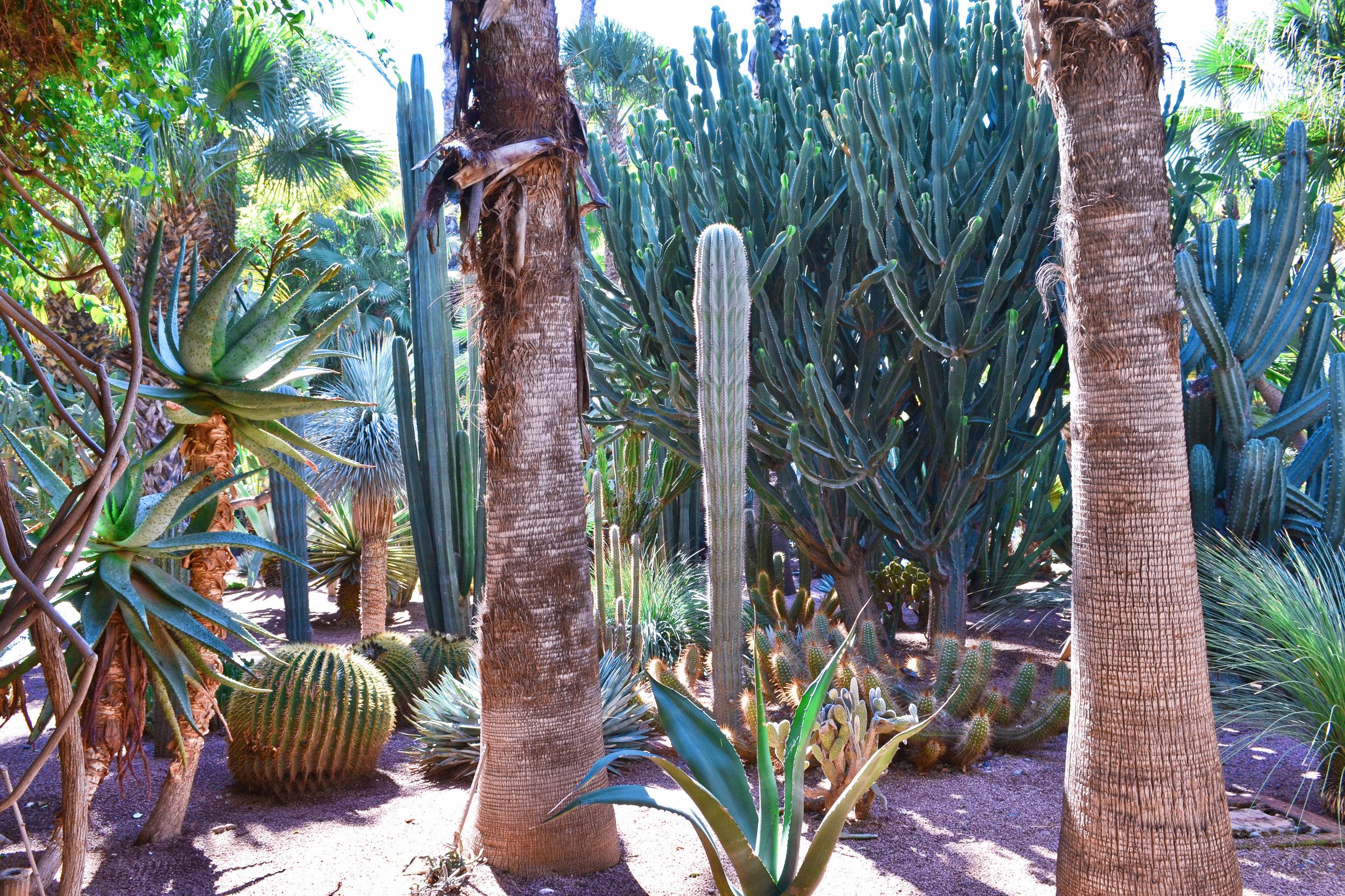majorelle garden cacti