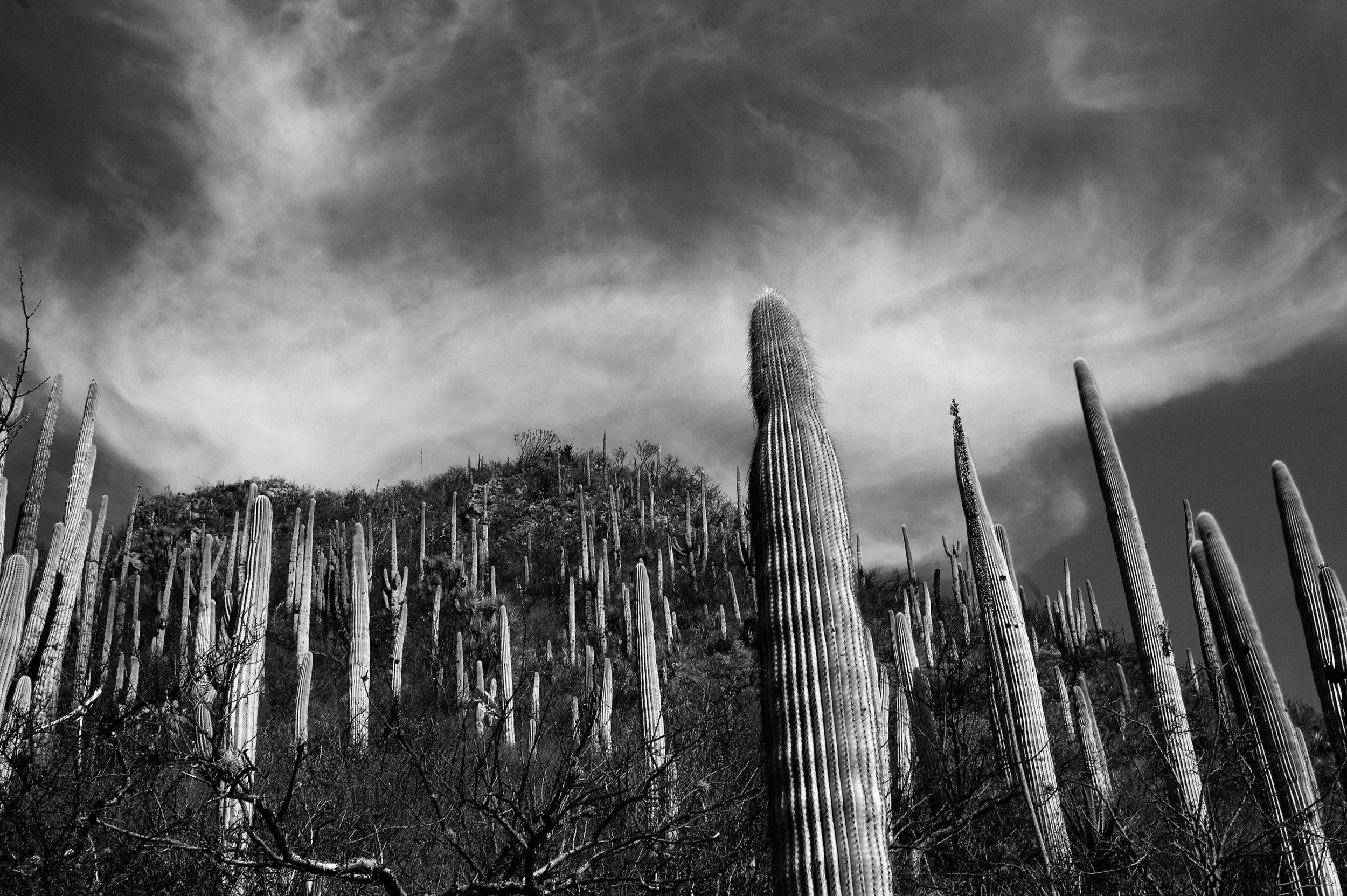 Reserva de la Biosfera Tehuacán-Cuicatlán. México. 2005.