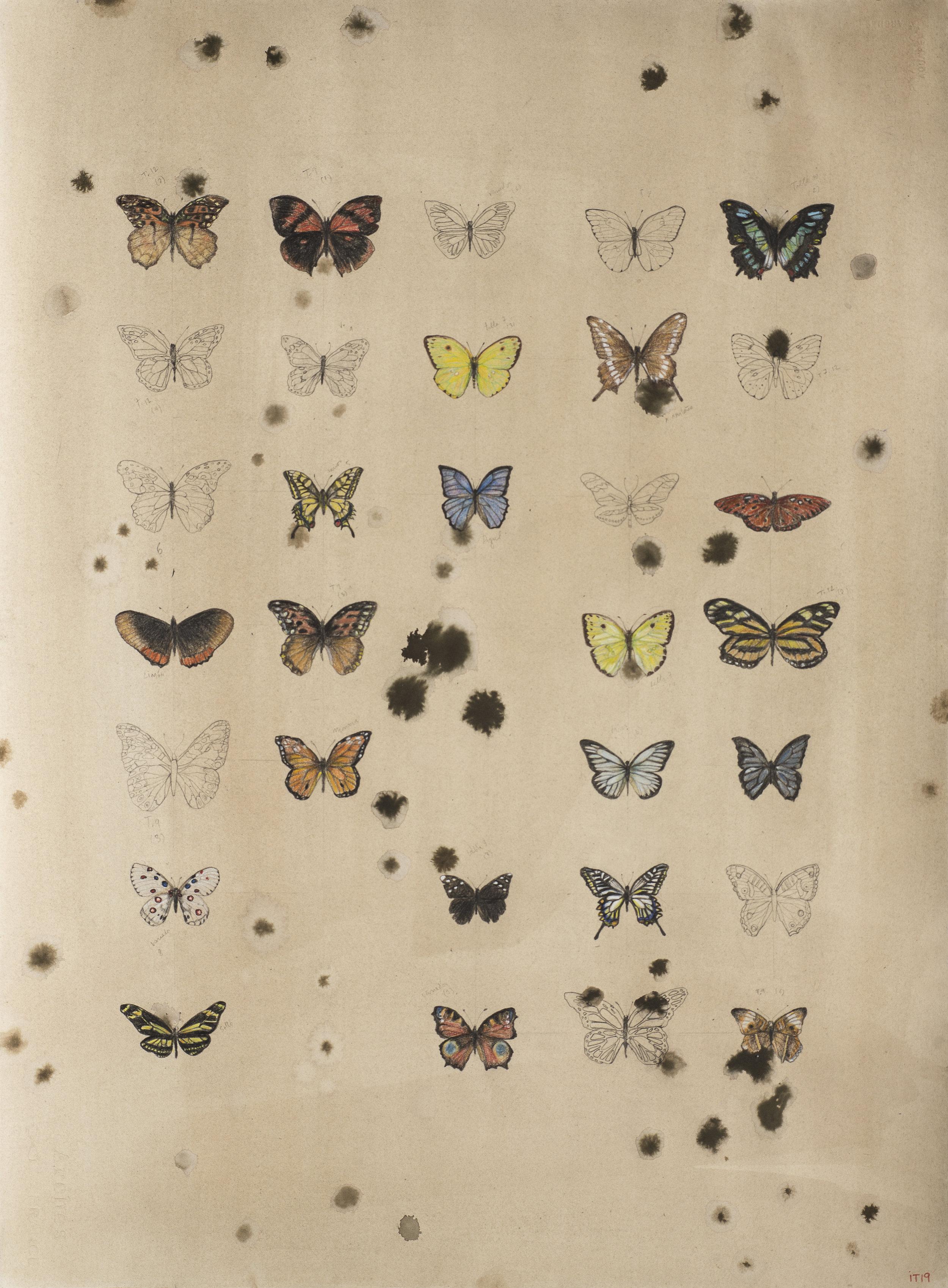 Mariposas en serie.jpg