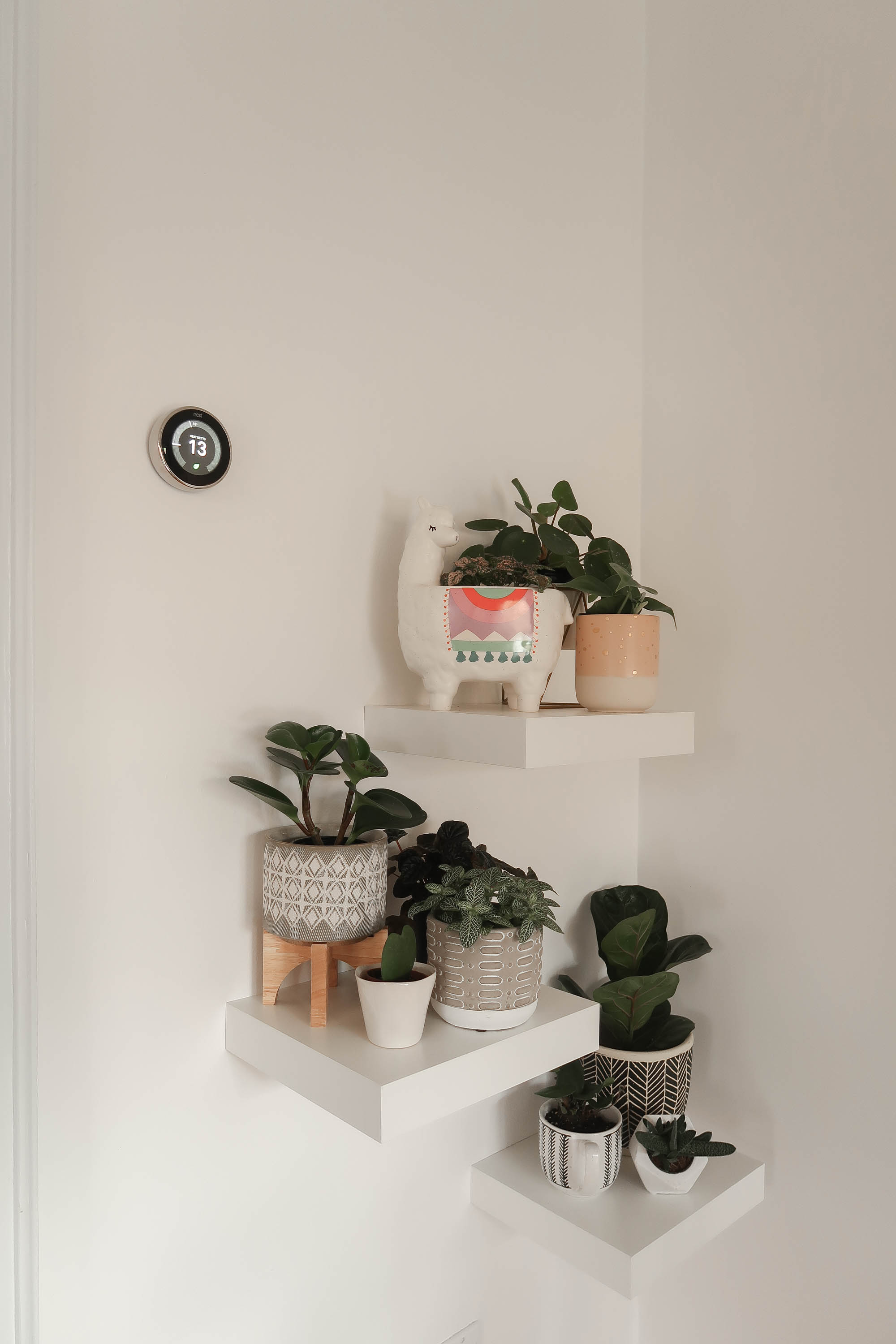 floating plant wall - plant baby heaven