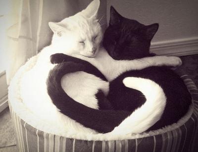 New love! So cute.