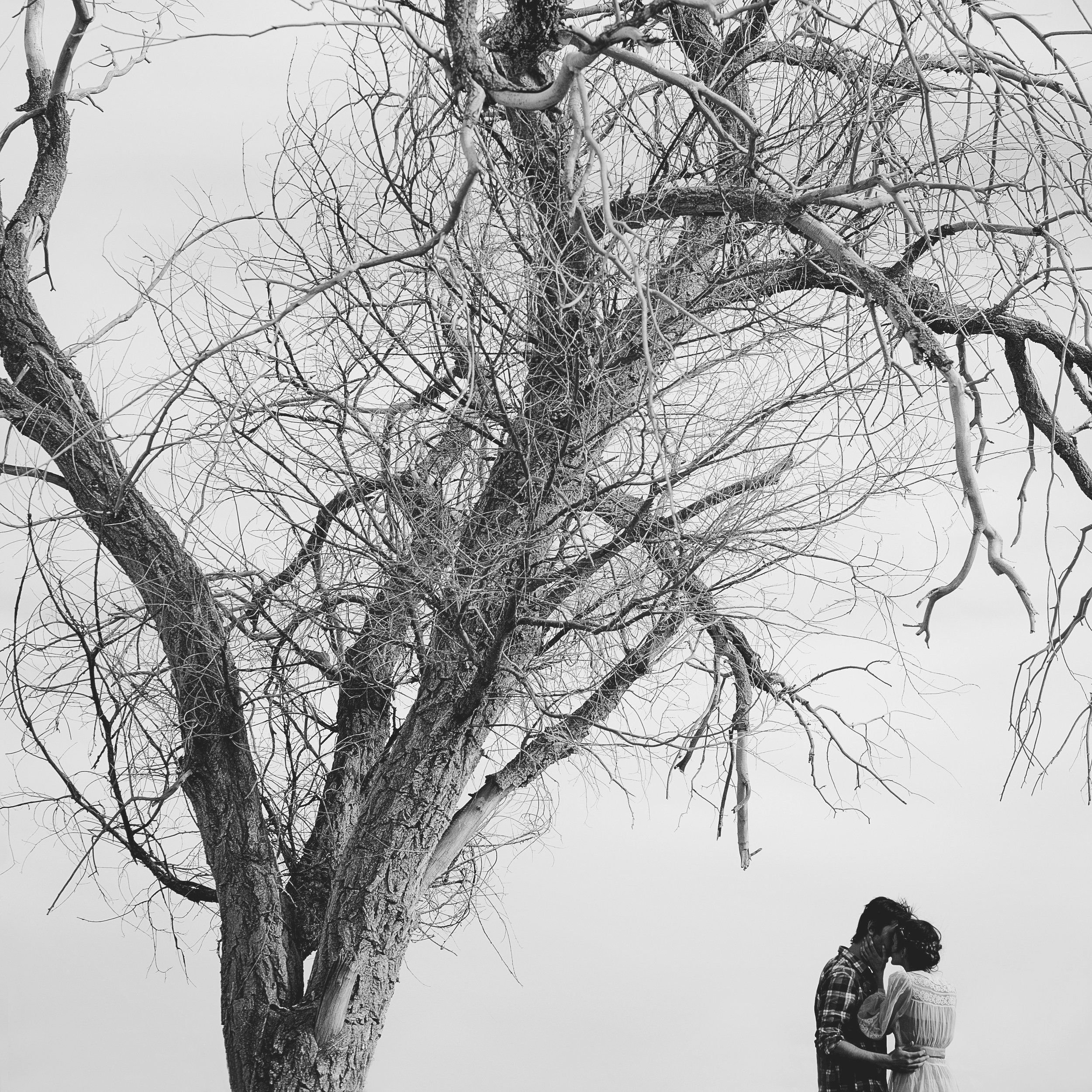 © duston-todd-fashion-couples-portrait-tree.jpg