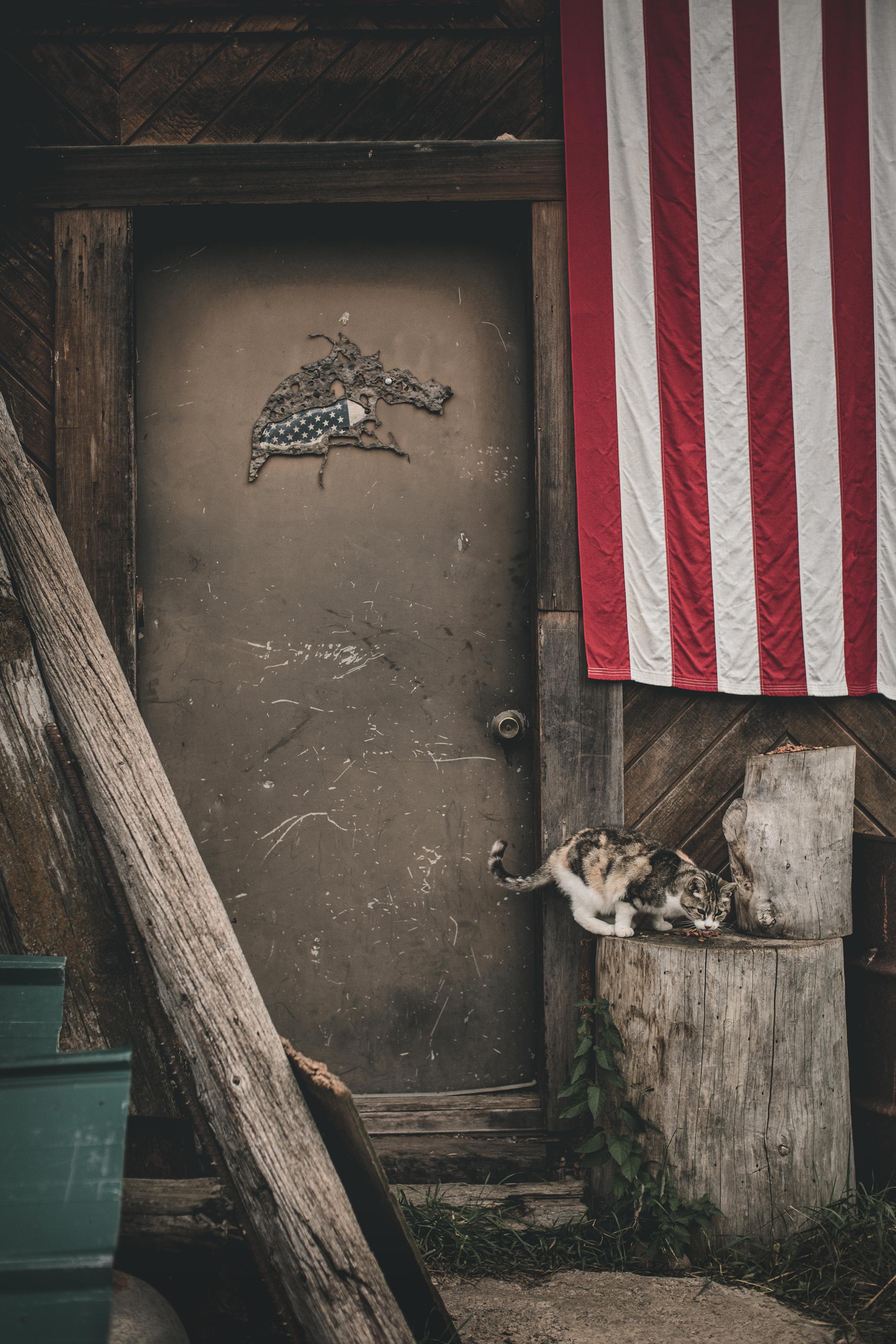 © duston–todd–cat-america-flag.jpg