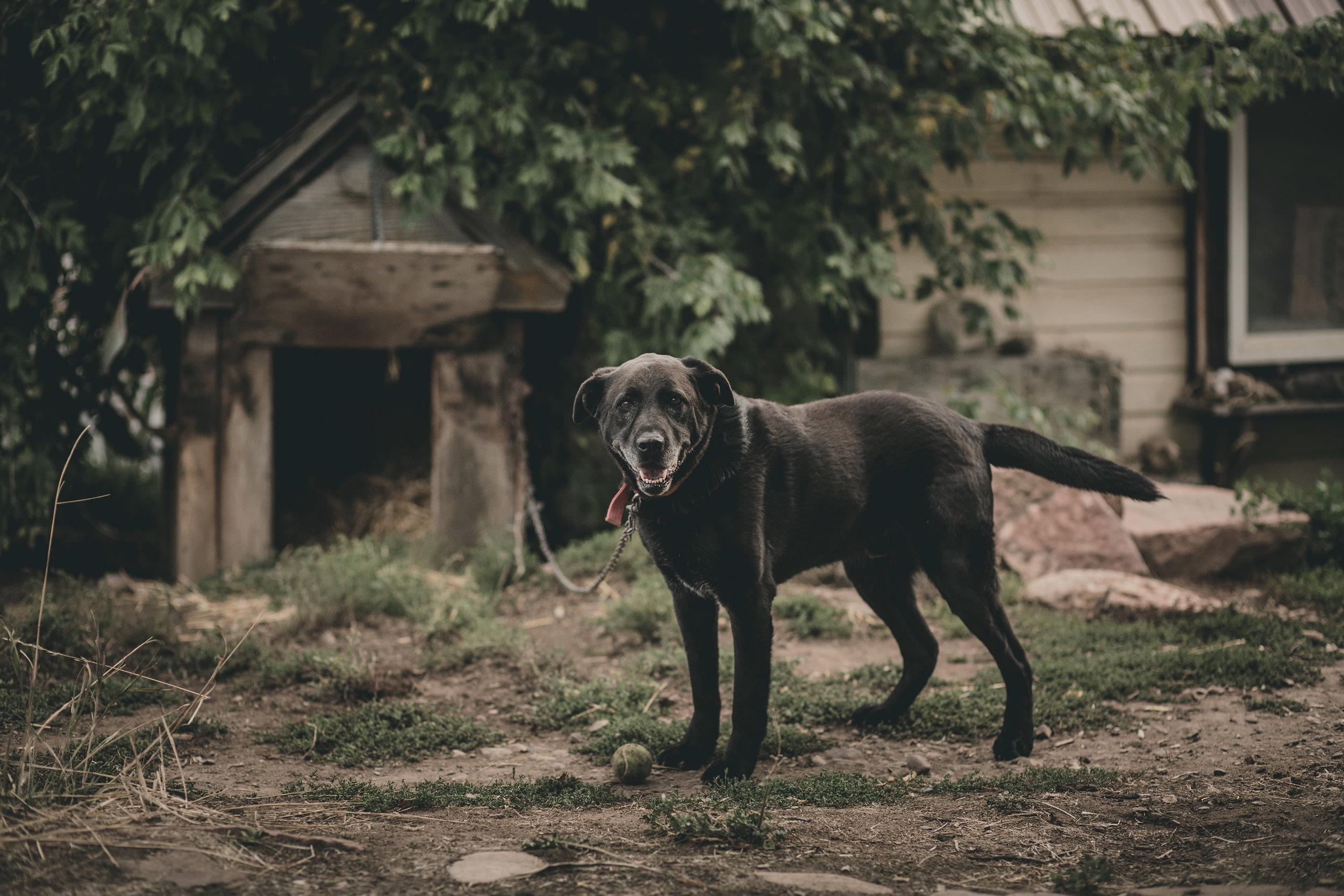 © duston–todd–dog-doghouse.jpg