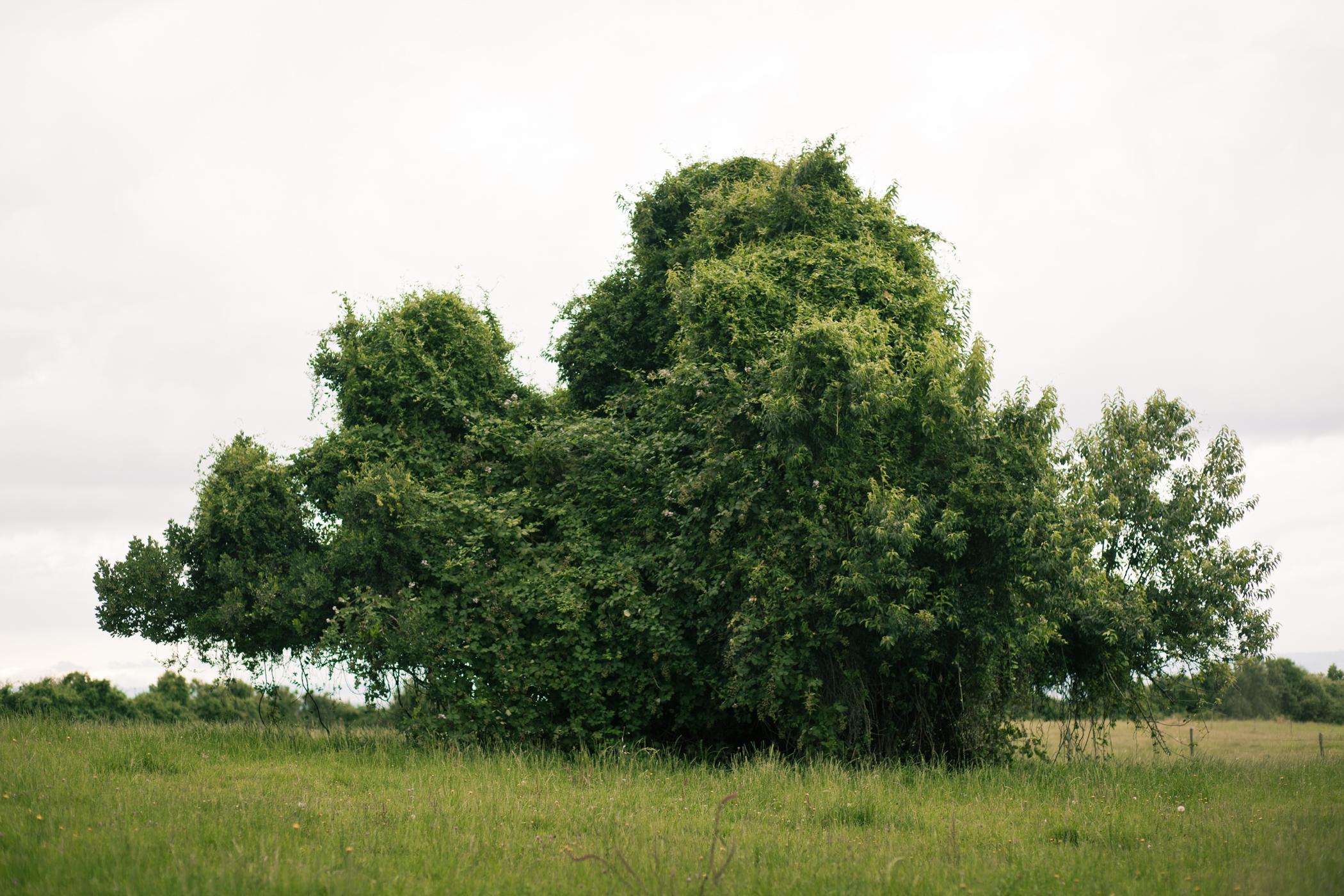 © duston todd_fine art_chile_tree.jpg