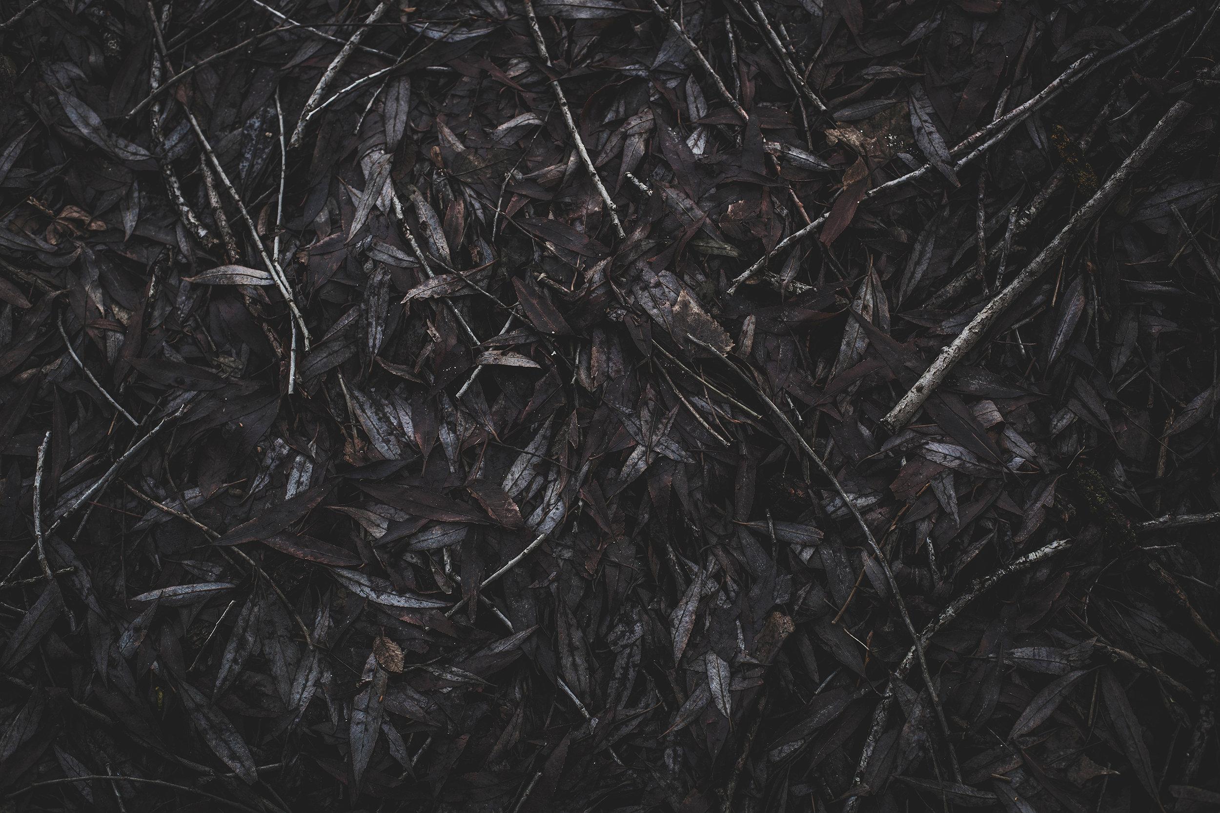 © duston todd_fine art_leaves_lines.jpg