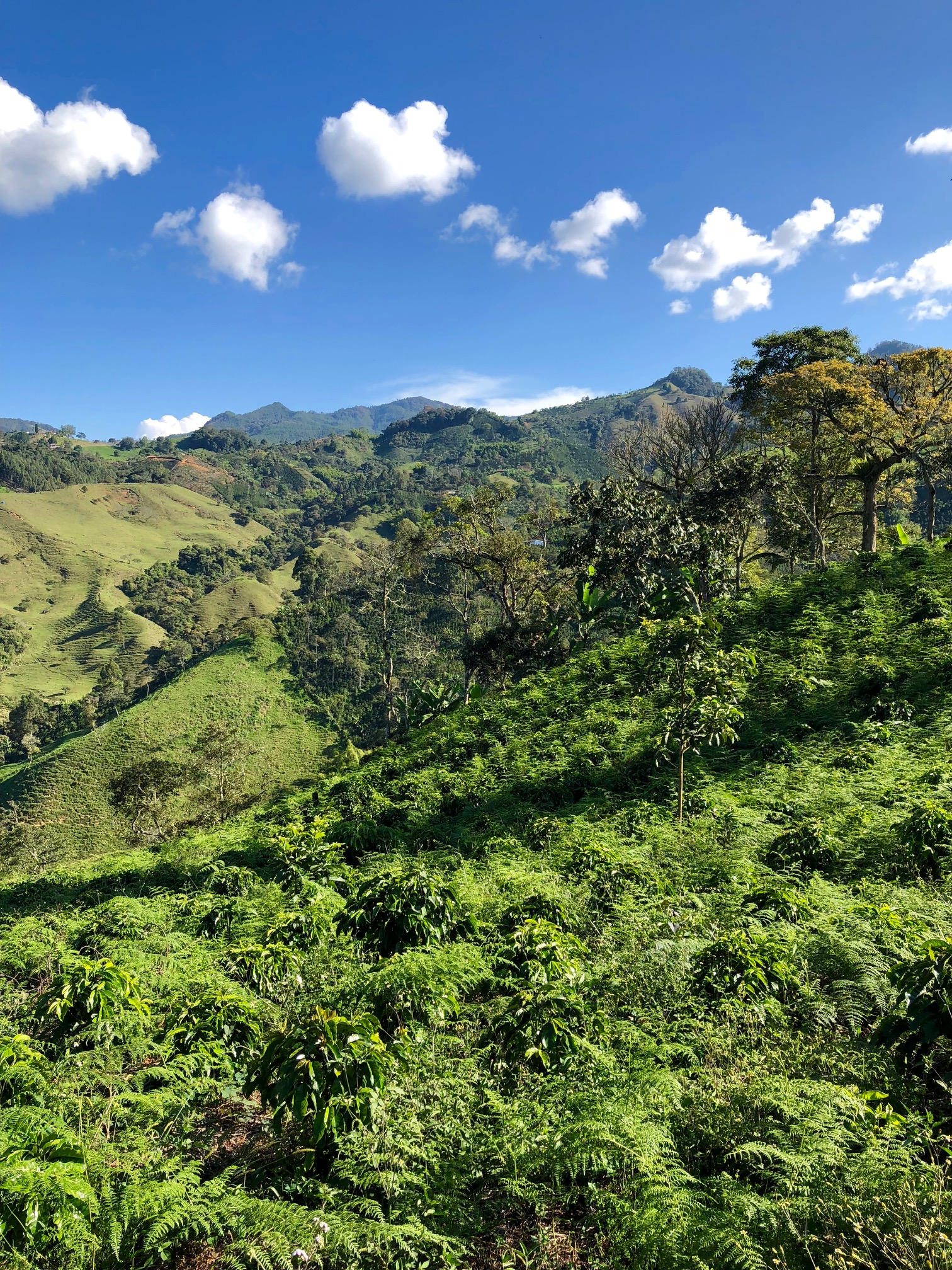 View over magnificent coffee country, Colombia 2019 (SMT.com)