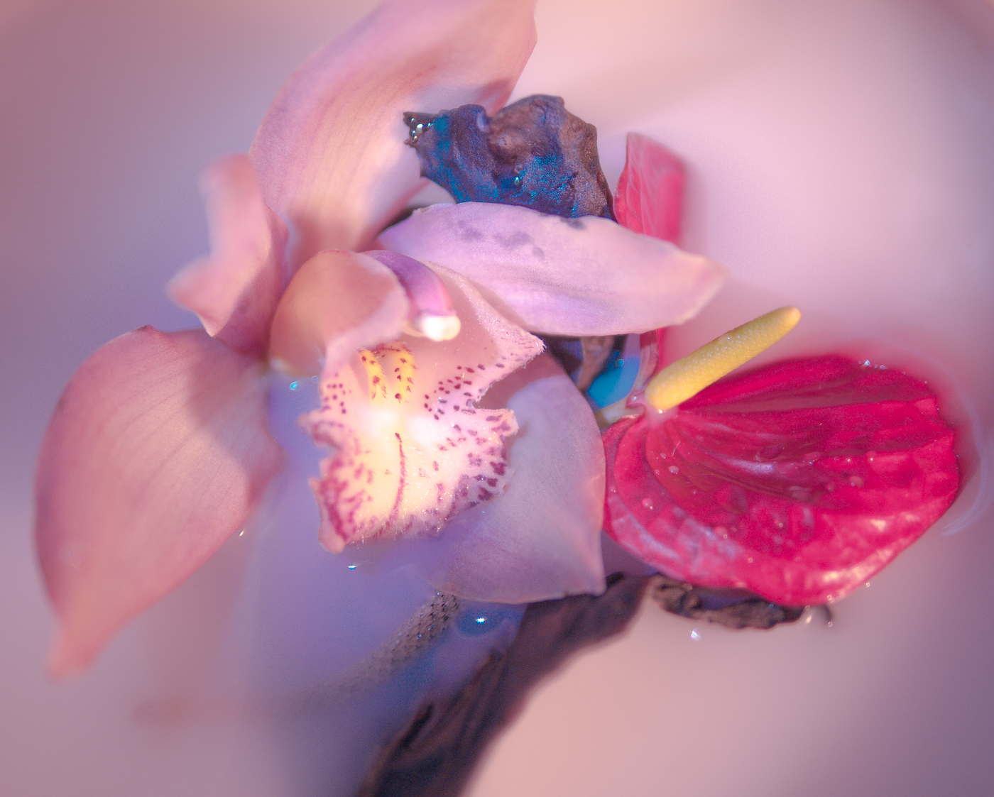 171123_orchid-9_.jpg