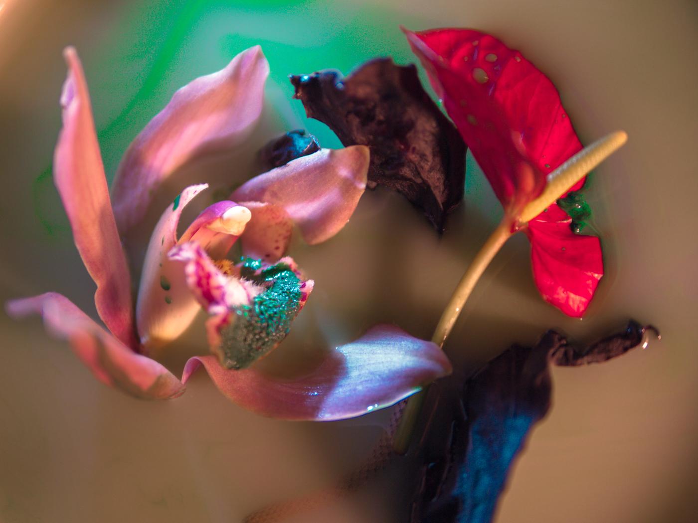 171123_orchid-17.jpg