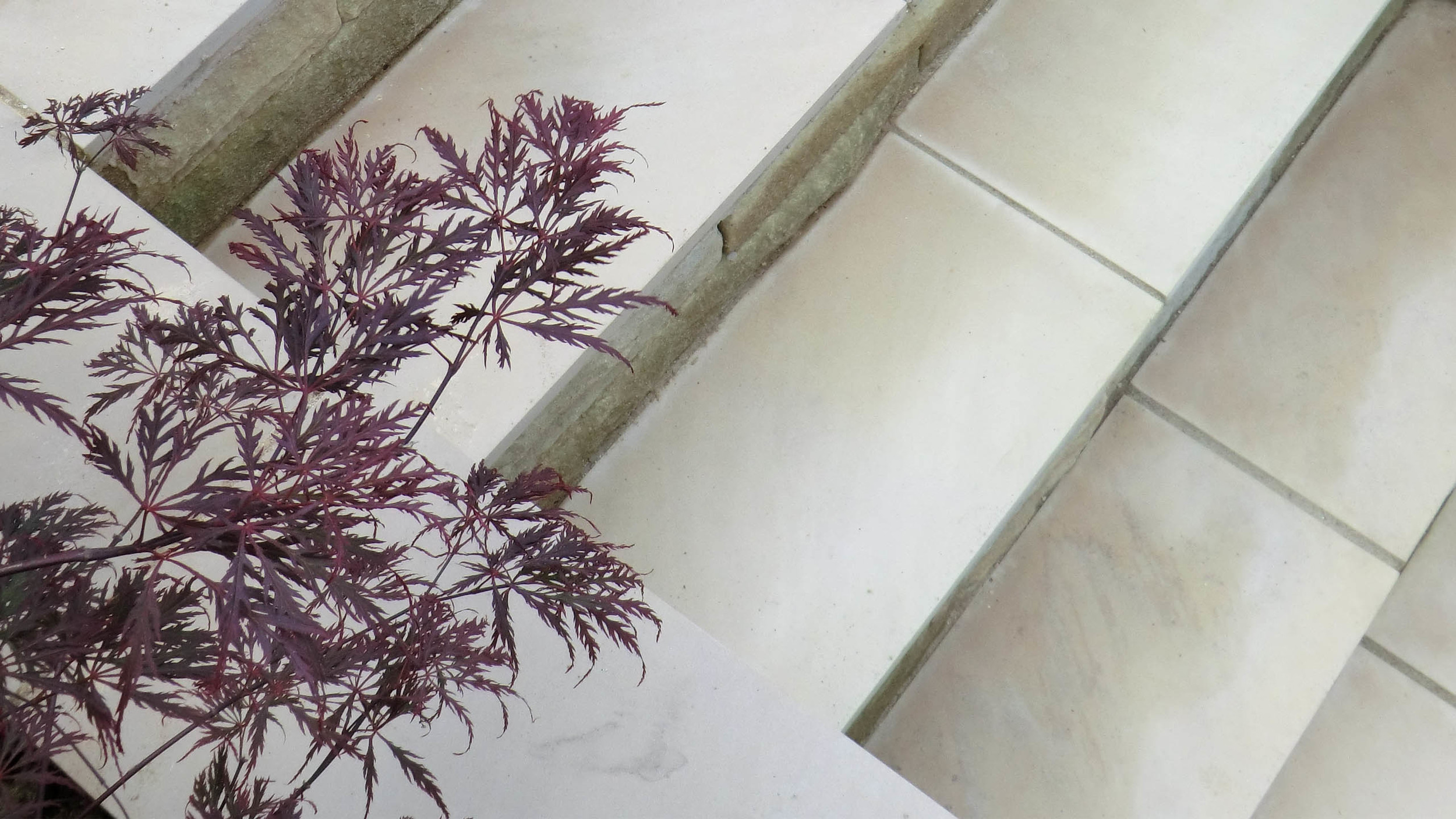 Contemporary Sawn Stone with Acer palmatum 'Dissectum'