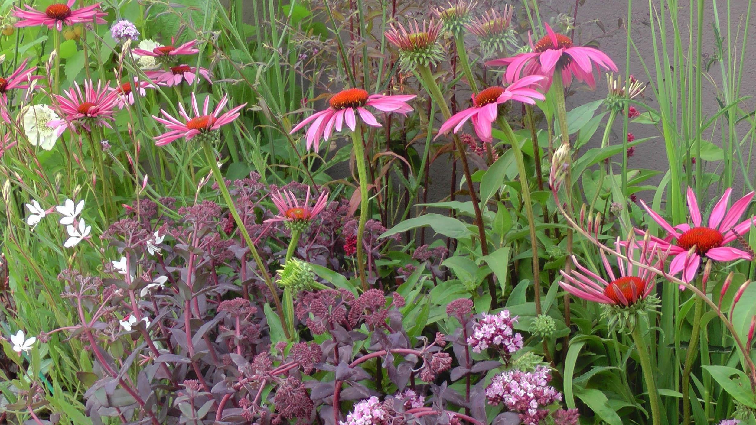 Cheshire Garden Design: RHS Tatton Flower Show 'Precious Resources Garden': Raised border with perennial planting